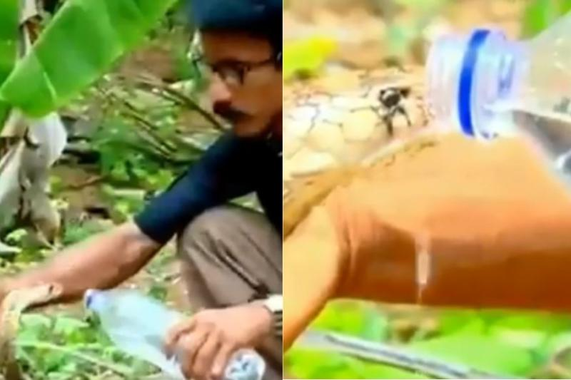 Watch: Daring Forest Official Offers Water to a Cobra Without Protective Gear