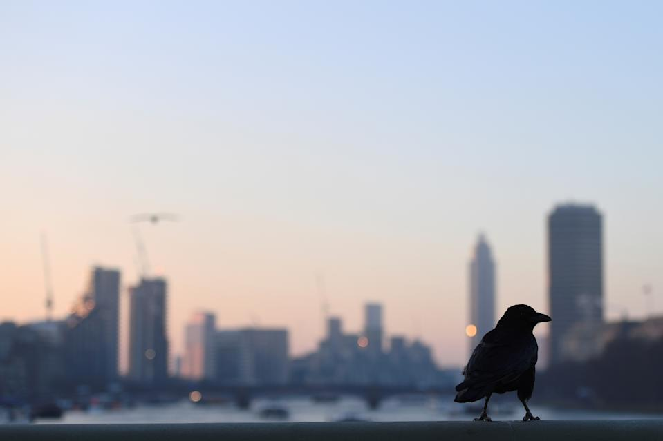 A crow sits on Westminster Bridge at dawn, in London, Britain, December 12, 2017. REUTERS/Clodagh Kilcoyne