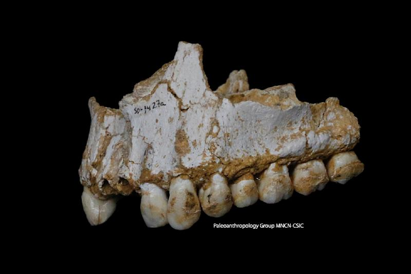 A handout photo released by Paleoanthropology Group MNCN-CSIC shows the upper jaw of Neanderthal El Sidron 1, found in what is today Spain