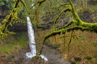 """<p>The Pacific Northwest never disappoints for avid hikers, and <a href=""""https://www.tripadvisor.com/Attraction_Review-g52080-d124628-Reviews-Silver_Falls_State_Park-Sublimity_Oregon.html"""" rel=""""nofollow noopener"""" target=""""_blank"""" data-ylk=""""slk:Silver Falls State Park"""" class=""""link rapid-noclick-resp"""">Silver Falls State Park</a> is no exception. Located in Sublimity, Oregon, the 9,200 acres contain a myriad of hiking trails. While you're there, take a walk behind the 177-foot South Falls. </p><p><br><a class=""""link rapid-noclick-resp"""" href=""""https://go.redirectingat.com?id=74968X1596630&url=https%3A%2F%2Fwww.tripadvisor.com%2FAttraction_Review-g52080-d124628-Reviews-Silver_Falls_State_Park-Sublimity_Oregon.html&sref=https%3A%2F%2Fwww.countryliving.com%2Flife%2Ftravel%2Fg24487731%2Fbest-hikes-in-the-us%2F"""" rel=""""nofollow noopener"""" target=""""_blank"""" data-ylk=""""slk:PLAN YOUR HIKE"""">PLAN YOUR HIKE</a></p>"""