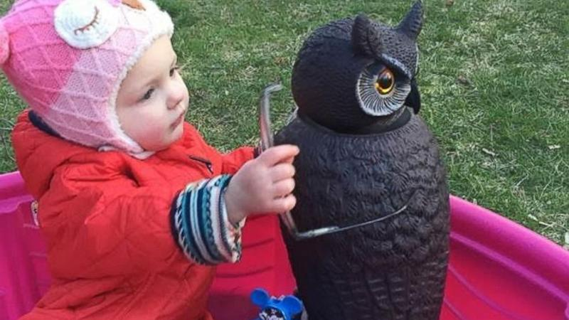 Little Girl's Love Affair With Owl Lawn Ornament Is Adorably Absurd