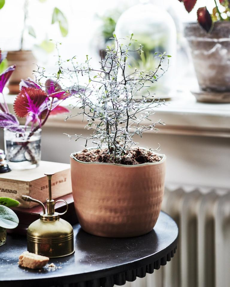 """<p>Each one of these terracotta pots has a unique look, thanks to the firing process and the hand-formed shapes. </p> <p><strong>To buy: </strong>$15, <a href=""""https://www.ikea.com/us/en/p/botanisk-plant-pot-terracotta-handmade-30461325/"""" target=""""_blank"""">ikea.com</a>. </p>"""