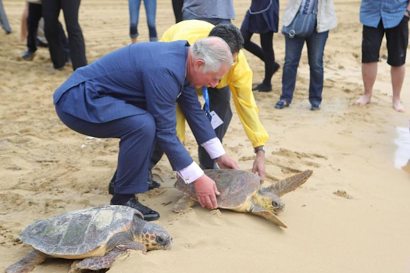 The Prince also helped two other turtles (PA)