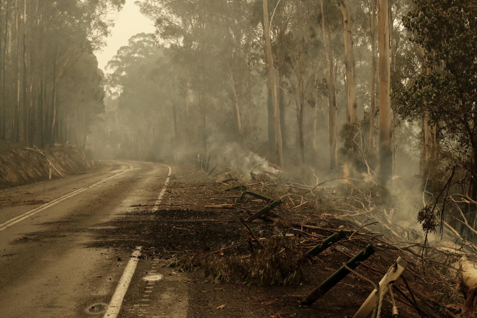 Burnt trees and debris cover the road outside Cann River along the Monaro Highway, Australia.