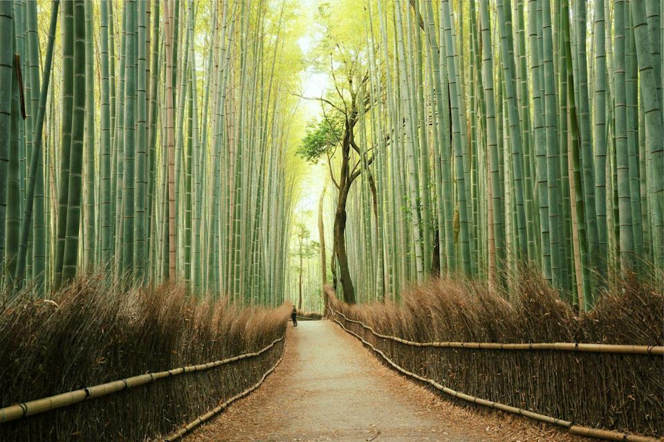 <p>Towering bamboo stalks softly swaying in the wind creates a peaceful, verdant escape from the high-energy of Kyoto. Just on the outskirts of the city, Arashiyama Bamboo Forest features numerous winding pathways for visitors to lose themselves among its natural beauty and the serene rustling of the leaves. The sounds from the bamboo groves are considered so relaxing that the the Ministry of the Environment name it one of the Top 100 Soundscapes of Japan in 1996.</p>