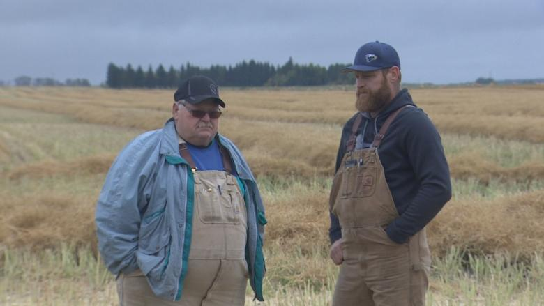 Alberta farmers hope wet weather won't bring a repeat of tough 2016 harvest