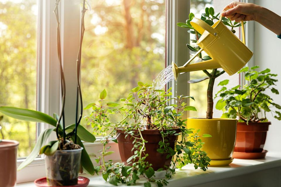 <p>Few things can brighten up a home quite like some indoor houseplants. But if you're not exactly an expert gardener and you have more of a black thumb than a green thumb, you might feel reluctant to introduce any indoor plants into your home. But there's no need to worry, as there are plenty of great indoor plants that don't require too much upkeep. </p><p>These are the best indoor plants for beginners, so your space can feel like a luscious green wonderland. Whether you want something leafy and green or something a bit more colorful, these house plants actually thrive within your home. Most require watering only once a week at most, which means you don't have to feel the need to babysit them or let them get in the way of your busy life. Consider taking one of these indoor plants home to start your life as a proud Plant Parent. </p>
