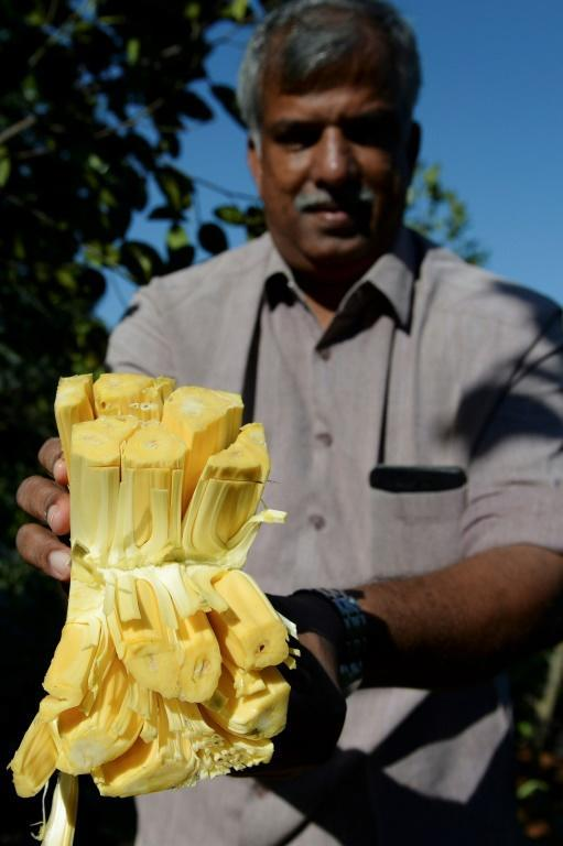 Varghese Tharakkan switched from selling rubber to jackfruit and has seen business boom (AFP Photo/Arun SANKAR)