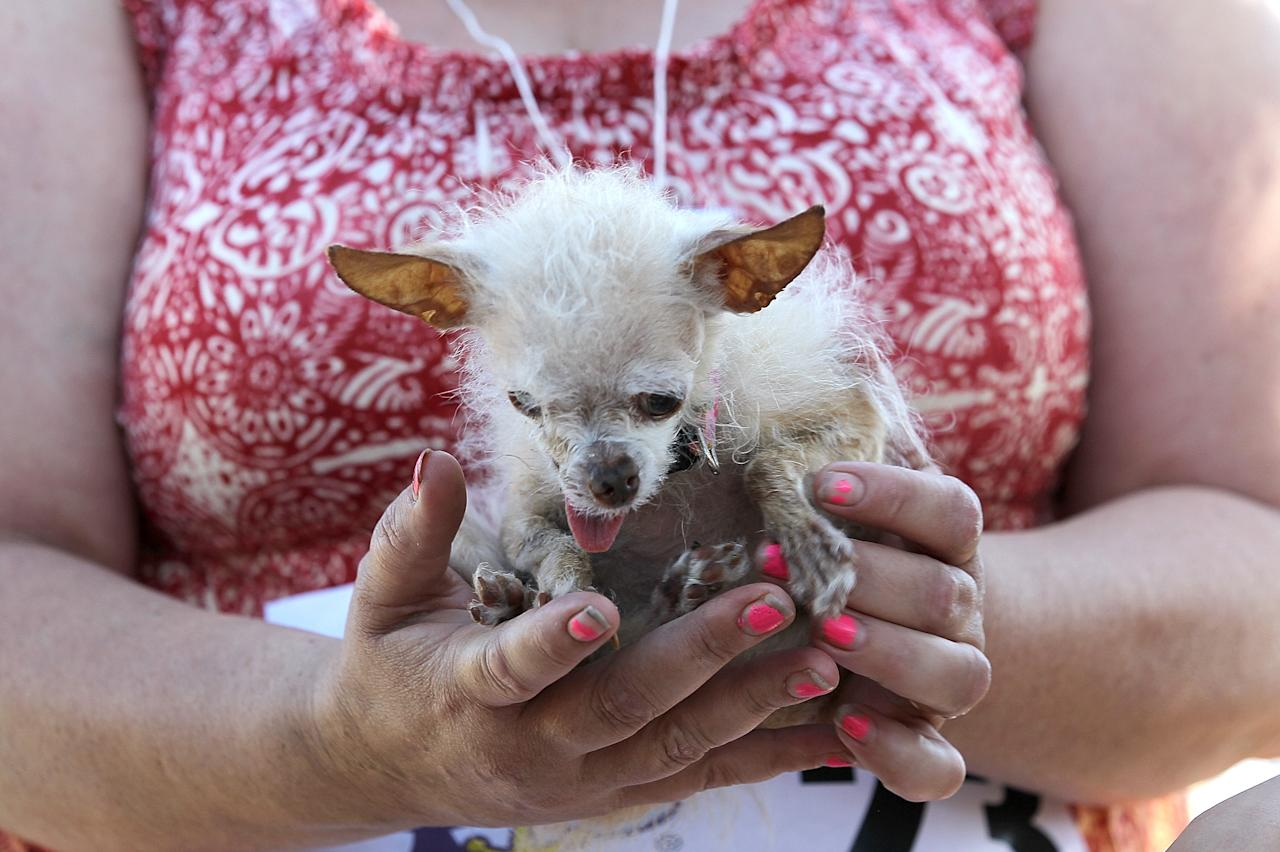 PETALUMA, CA - JUNE 24:  A dog named Yoda sits in the arms of Terry Schumacher of Hanford, California during the 23rd Annual World's Ugliest Dog Contest at the Sonoma-Marin County Fair on June 24, 2011 in Petaluma, California.  Yoda won the $1,000 top prize as the world's ugliest dog. (Photo by Justin Sullivan/Getty Images)