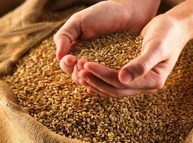 <b>Wheat germ:</b> Being a big source of Vitamin E, Wheat Germ decreases the development of cataract and muscular degeneration. Almonds, hazelnut and sunflower seeds are also a great source of Vitamin E which helps in keeping your eyes healthy.