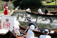 Annual census of Britain's Queen Elizabeth's swans along the River Thames