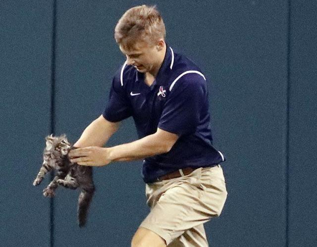 The cat nearly took a chunk out of this Busch Stadium grounds crew member's finger during Wednesday's Cardinals-Royals game. (AP)