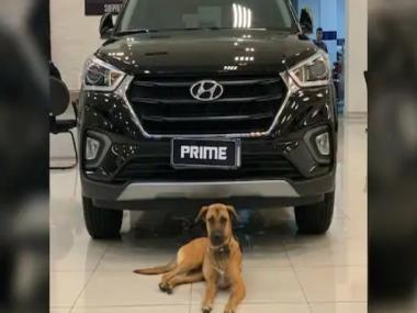 Canine turns car salesman: Hyundai outlet in Brazil appoints 'Tucson Prime the dog' as honorary employee