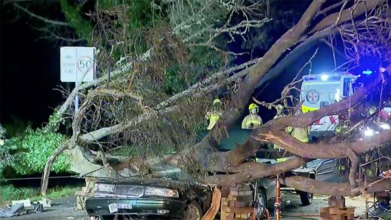 A woman has died after a tree fell onto her car in Katoomba, west of Sydney. Source: 9News