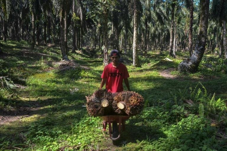 Indonesian farmer Kawal Surbakti says a planned EU palm oil ban could devastate his income