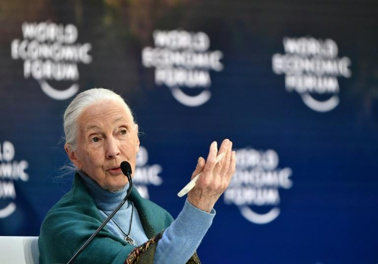 World-renowned primatologist Jane Goodall pleaded pleaded for humanity to learn from past mistakes (AFP Photo/Fabrice COFFRINI)