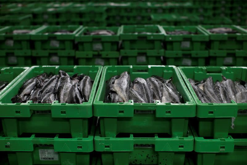 FILE PHOTO: A haul of fish caught in British waters sits in a freezer at the Danske Fiskeauktioner, a fish auction facility in the village of Thyboron in Jutland, Denmark