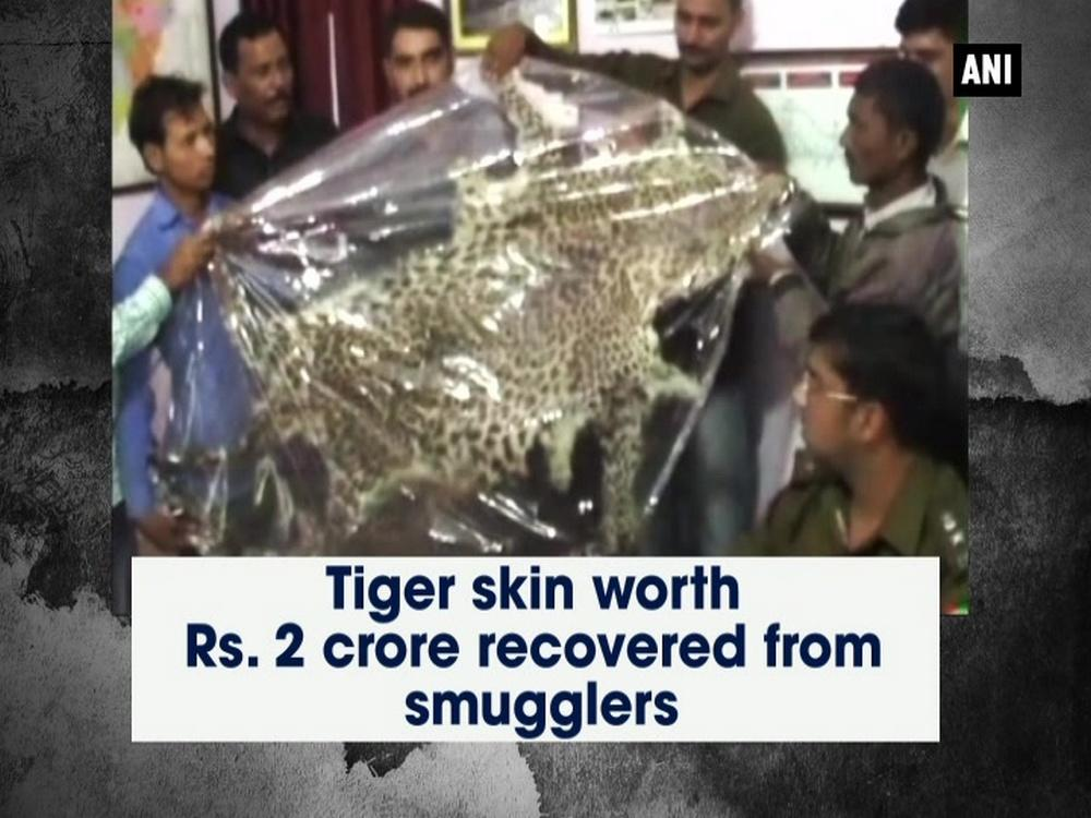 A tiger skin worth Rs. 2 crores was recovered by the police after they arrested two smugglers from Moradabad district of Uttar Pradesh on Sunday. The accused said they had hunted tigers in the United Kingdom and then sold its skin in Delhi and other states at a higher price. A forest team and a veterinary team are investigating the incident. The accused are being questioned for further information.