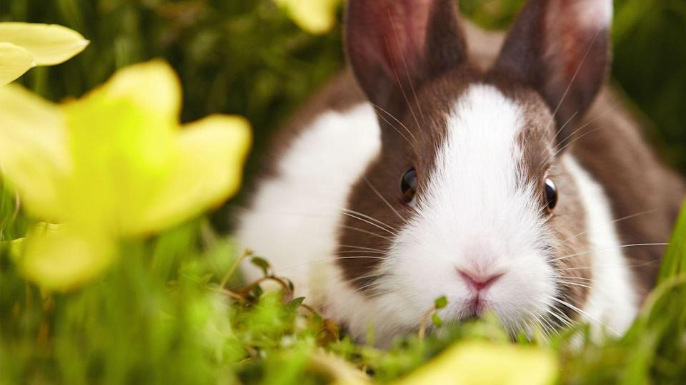 """<p>Who can resist an adorable bunny? Absolutely no one, that's who.</p><p><a class=""""link rapid-noclick-resp"""" href=""""https://www.hallmarkchannel.com/hallmark-channel-virtual-backgrounds-spring"""" rel=""""nofollow noopener"""" target=""""_blank"""" data-ylk=""""slk:DOWNLOAD HERE"""">DOWNLOAD HERE</a></p>"""
