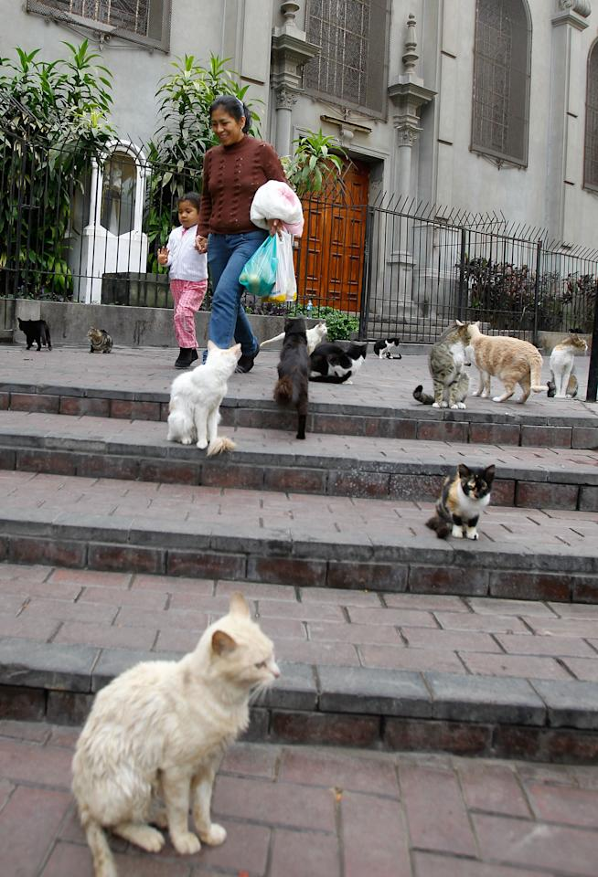 Pedestrians walk past cats gathered in the central park of Lima's upscale seaside Miraflores district, in Peru, Wednesday, Aug. 2, 2012. (AP Photo/Martin Mejia)