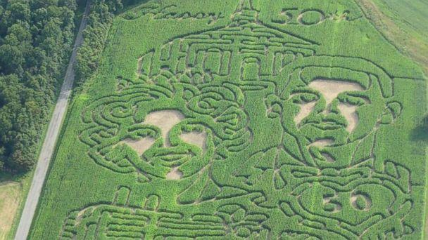 Man Surprises Wife With 50th Anniversary Corn Maze of Their Wedding Photo