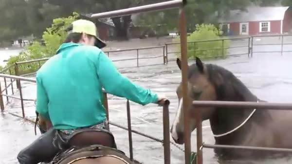 Watch Texas Teen Brave Harvey Flood To Save Trapped Horse
