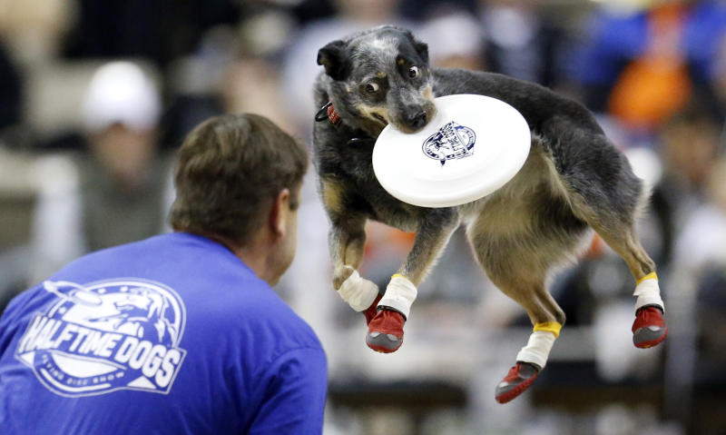 FILE - In this Jan. 16, 2019, file photo, a dog catches a flying disk as part of a halftime show at an NCAA college basketball game between Vanderbilt and South Carolina in Nashville, Tenn. The photo was honored by the Associated Press Sports Editors as best sports feature photo of 2019 at their annual winter meeting in St. Petersburg, Fla. (AP Photo/Mark Humphrey, File)