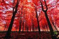 <p>We could spend all day daydreaming in this magical forest filled with fall hues.</p>