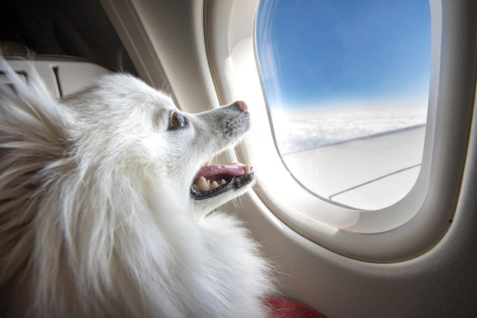 Delta, United, American, Alaska and JetBlue are a handful of the airlines which will implement the emotional support animal restrictions starting Jan. 11. (Photo: Getty Images stock photo)