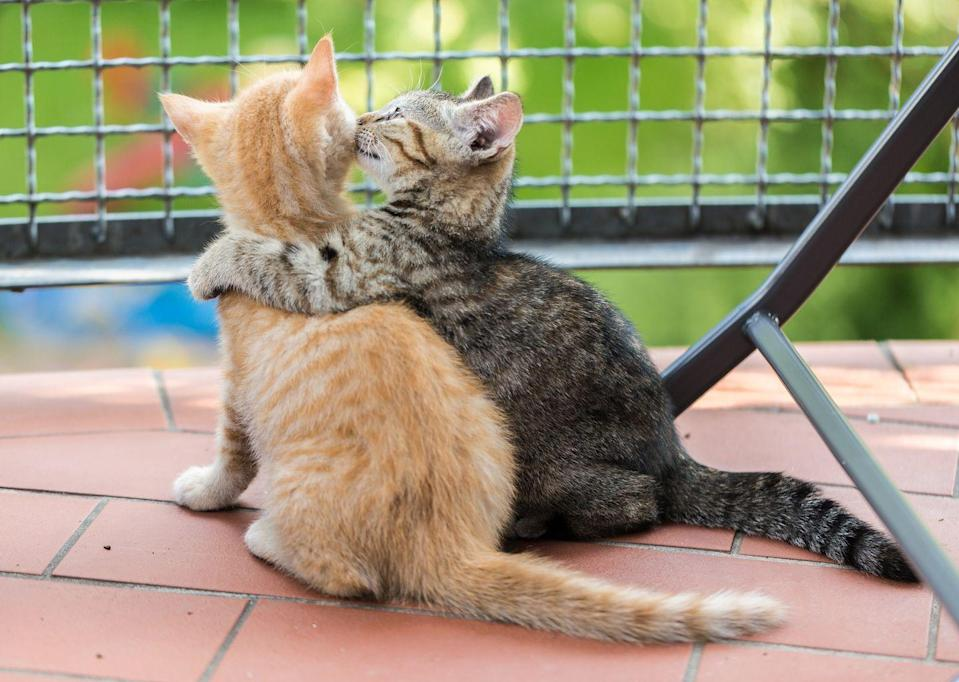 <p>These cats are literally relationship goals. Or best friend goals. Or sibling goals. You know what, they're everything goals. </p>