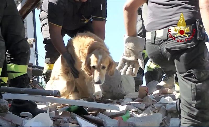 Italian firefighters carry golden retriever Romeo after he was pulled from the rubble of a house in San Lorenzo a Flaviano on September 2, more than nine days after Italy's devastating earthquake (AFP Photo/HO)
