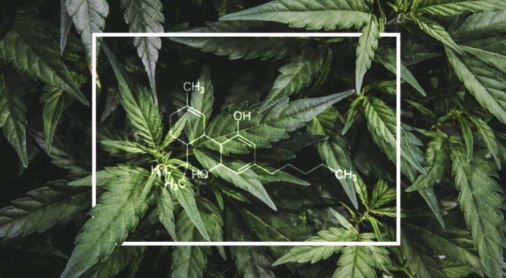 CGG Stock: Canopy Growth May Be Too Dangerous to Buy Now