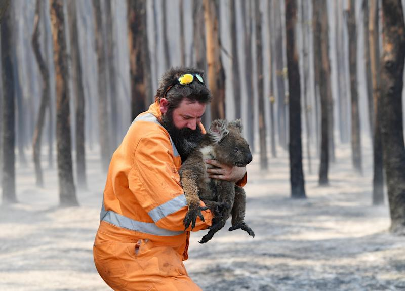 Adelaide wildlife rescuer Simon Adamczyk is seen with a koala rescued at a burning forest on Kangaroo Island (REUTERS)