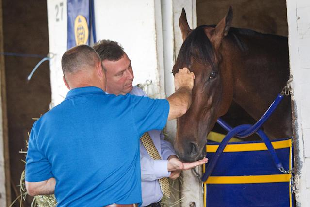 American Pharoah at his stall after he returned to Churchill Downs. (AP)