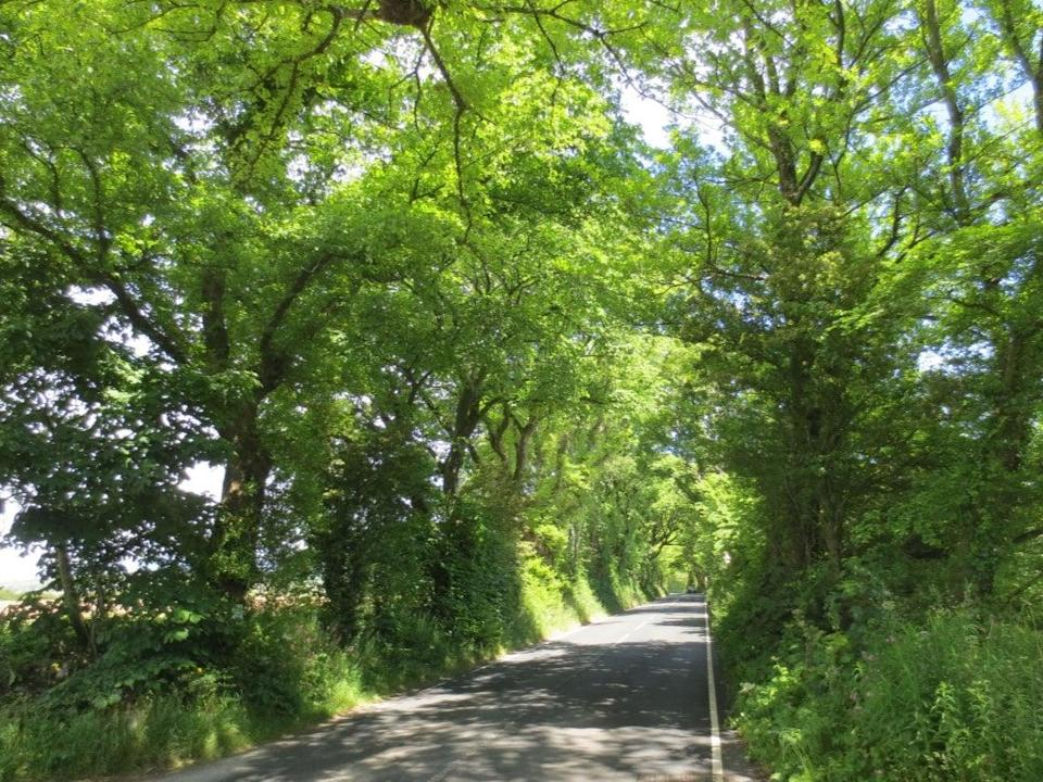 At least 20 mature elm trees are to be cut down to create a new access road to a farm (Manx Wildlife Trust)