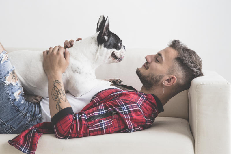 French Bulldog dog with affectionate attitude with his owner dressed in plaid shirt lying on the sofa