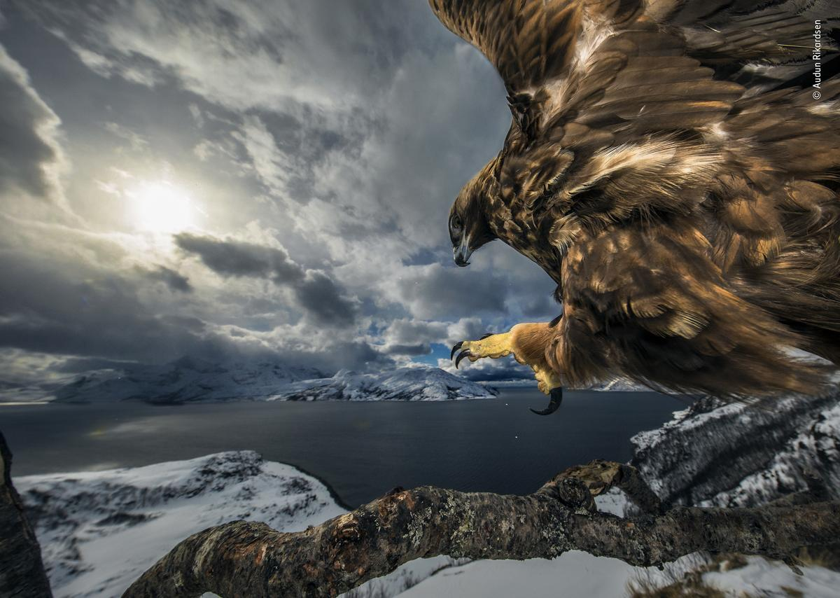 Land of the eagle by Audun Rikardsen, Norway. Audun's painstaking work captures the eagle's power as it comes in to land, talons outstretched, poised for a commanding view of its coastal realm.