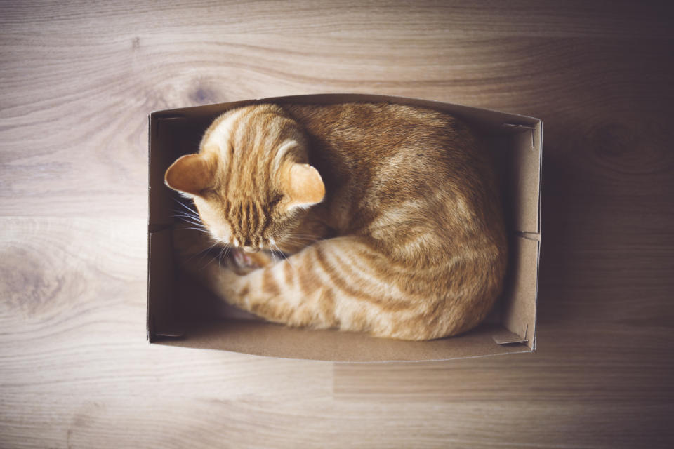 New research has thrown light on why cats love boxes and squares. (Getty Images)