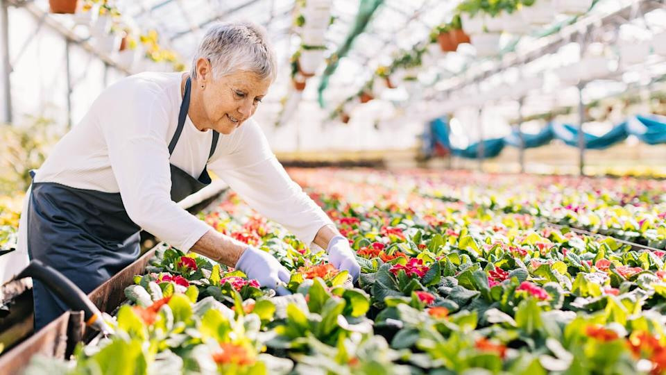 Senior woman working in the flower nursery, with copy space