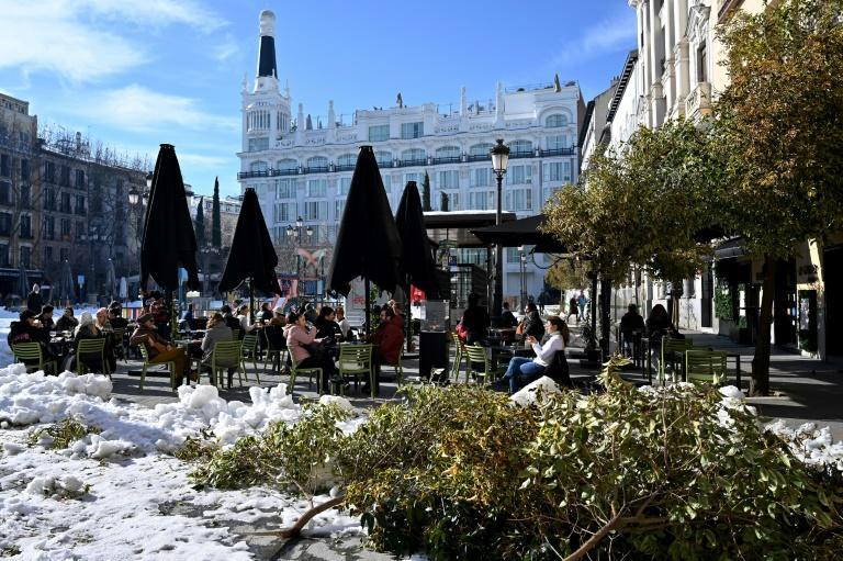 The heavy snow that hit Madrid in January was an environmental disaster for the city's trees