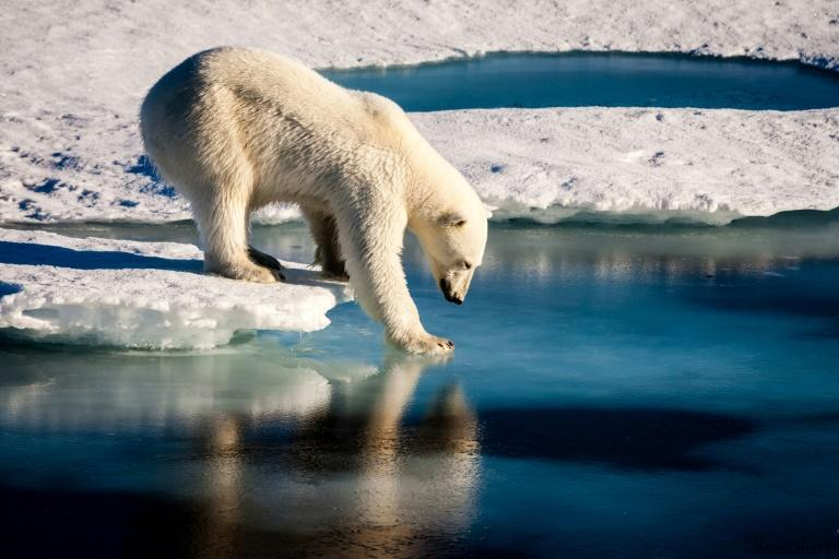 Environment: Man-made warming is mainly to blame for the loss of Arctic sea ice, a new study says. The ice is essential for polar bears and other Arctic species