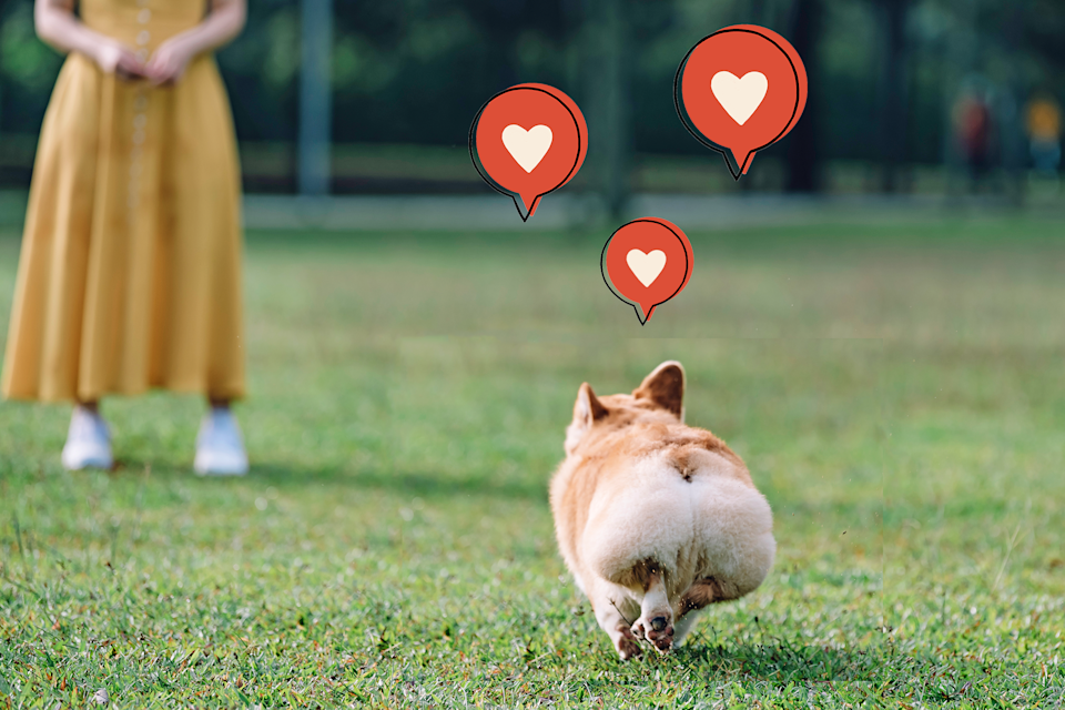 Corgi happily running to a person on a green space in a park