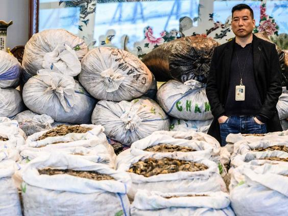 A Chinese customs officer stands in front of sacks of seized endangered pangolin scales during a press conference in Hong Kong on 1 February 2019 (AFP/Getty Images)