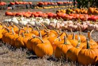 """<p><strong>Spearfish, South Dakota</strong></p><p><strong><a href=""""http://spearfishvalleyproduce.com/"""" rel=""""nofollow noopener"""" target=""""_blank"""" data-ylk=""""slk:Spearfish Valley Pumpkin Patch"""" class=""""link rapid-noclick-resp"""">Spearfish Valley Pumpkin Patch</a> </strong>has a revamped corn maze to celebrate in 2021 and countless other activities including a barrel train and hay jump. The maze gets a spooky spin the last two weekends of the season, so be sure to plan accordingly. Stay tuned for 2021 ticket prices.<br></p><p><em>*This photo is not from Spearfish Valley Pumpkin Patch.</em></p>"""