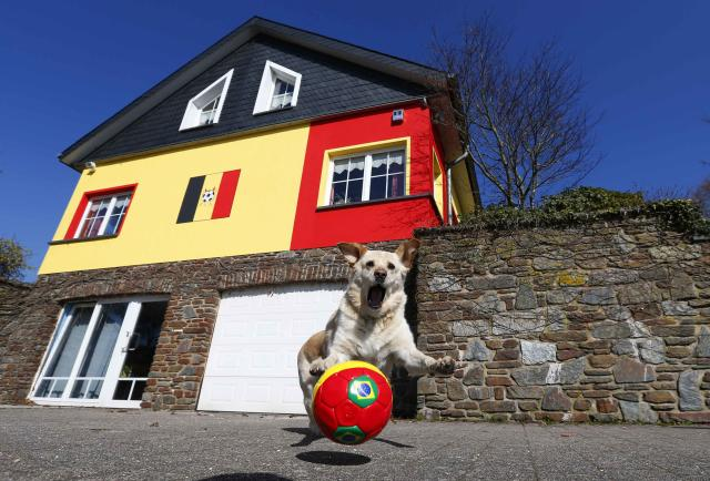 Belgian Wilfried Thelen's pet dog Ricco plays with a soccer ball outside his house which is painted in black, yellow and red, the colours of Belgium's national flag, in Saint Vith March 11, 2014. Thelen, who says he proud to be a Belgian and an ardent fan of the national soccer team, decided to decorate his house as a tribute to the Red Devils. However, Thelen now faces complaint from the local authorities who are requesting him to repaint his house back to white, in accordance to local regulation. REUTERS/Yves Herman (BELGIUM - Tags: ANIMALS SOCIETY SPORT SOCCER)