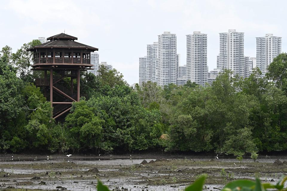 A low tide view of mangroves at Sungei Buloh Wetland Reserve on 2 February 2021. (PHOTO: AFP via Getty Images)