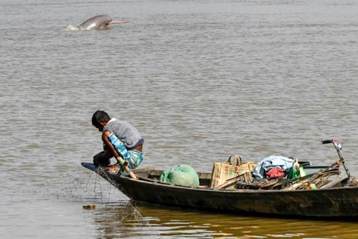 The rare Ganges river dolphin is found in the river systems of Nepal, Bangladesh and India (AFP Photo/Biju BORO)
