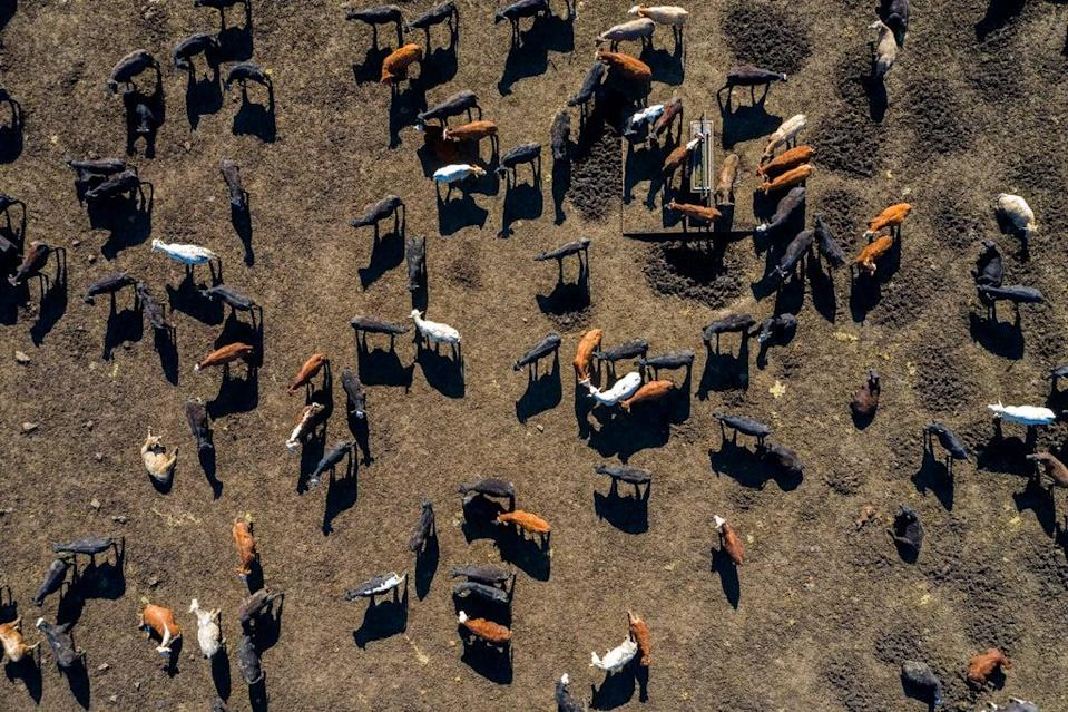 A UN report released earlier this month found that almost 90 per cent of the $540bn in global subsidies given to farmers each year are 'harmful' (Getty Images)