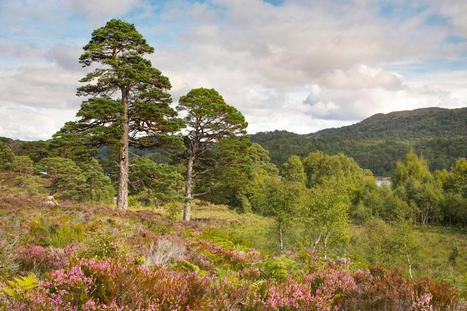 The project would rewild areas including Glen Affric (Grant Willoughby/Trees for Life/PA)