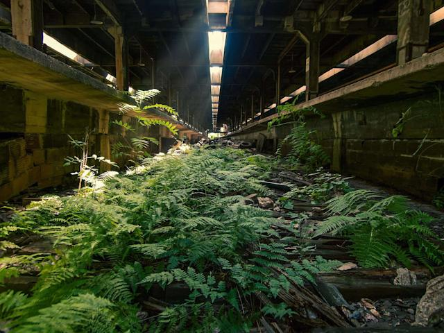 <p>Abandoned overgrown train tracks in New York. (Photo:Johnny Joo/Caters News) </p>